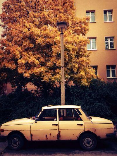 Autumn Walking Around Oldtimer Cars