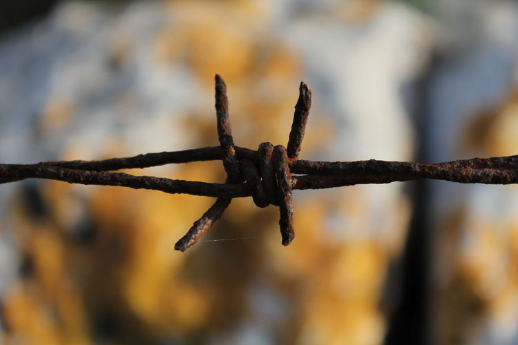 Detail Focus On Foreground Defocused Close-up Barbed Wire Rusty Razor Wire