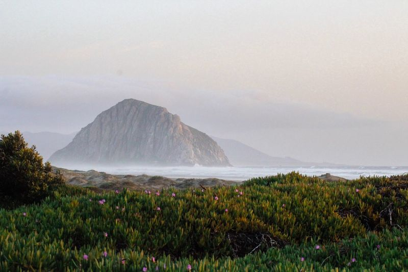 The Morro Rock. #usa #california #morrobay #usaroadtrip #pacificcoast #highwayone Beauty In Nature Plant Scenics - Nature Mountain Flower Environment Flowering Plant Nature Landscape Outdoors First Eyeem Photo