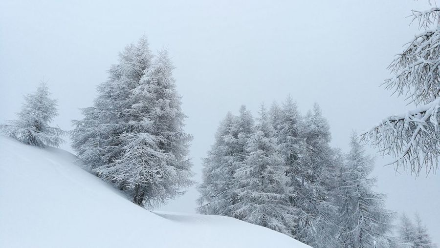 Snow Cold Temperature Winter Tree Beauty In Nature Nature Tranquility No People Frozen Forest Outdoors Pine Tree Extreme Weather Austria Mountains No Filters  All White