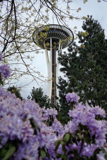I was framed. Space Needle Seattle Washington Flower Architecture Tourism Travel PNW Pacific Northwest  City Sky Moody PuzzledNW Seattle Space Needle Spaceneedle Downtown EyeEm Selects