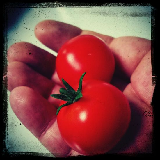 Homegrown cherry tomatoes :) Tomato Homegrown Tomatoes Cherry Tomato Yummy First Eyeem Photo