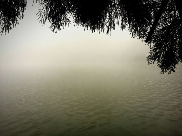 Lonely in the foggy at Mirik, India. CC(by-nc-nd)