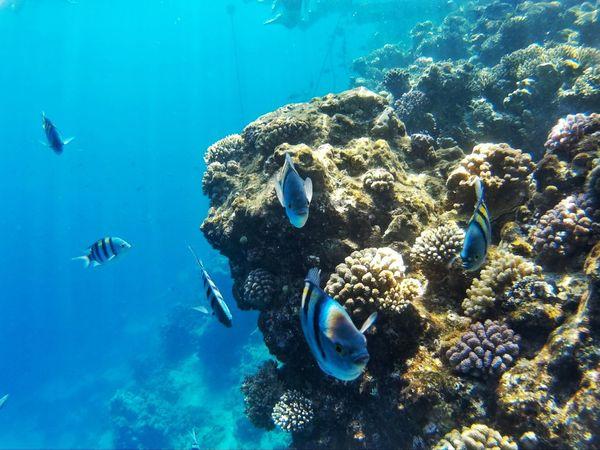 Traveling Ras Mohamed Egypt Egypt Travel Photography EyeEm EyeEm Best Edits EyeEm Best Shots - Nature EyeEmBestPics EyeEm Best Shots Day Beauty In Nature Adventure Water Blue Underwater