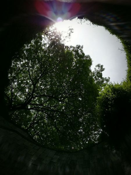 First Eyeem Photo Singapore View Fort Canning Park