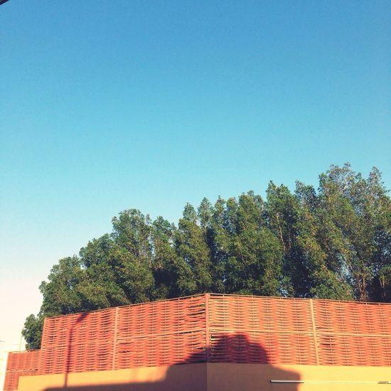 شجر Tree