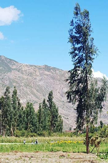 Landscape in Valencia valley, in La Paz - Bolivia Mountain Bolivia La Paz, Bolivia Valley Tree Nature Day Outdoors Growth Beauty In Nature Sky Landscape Grass