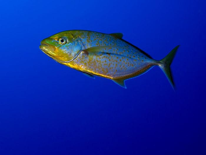 Sea Life No
