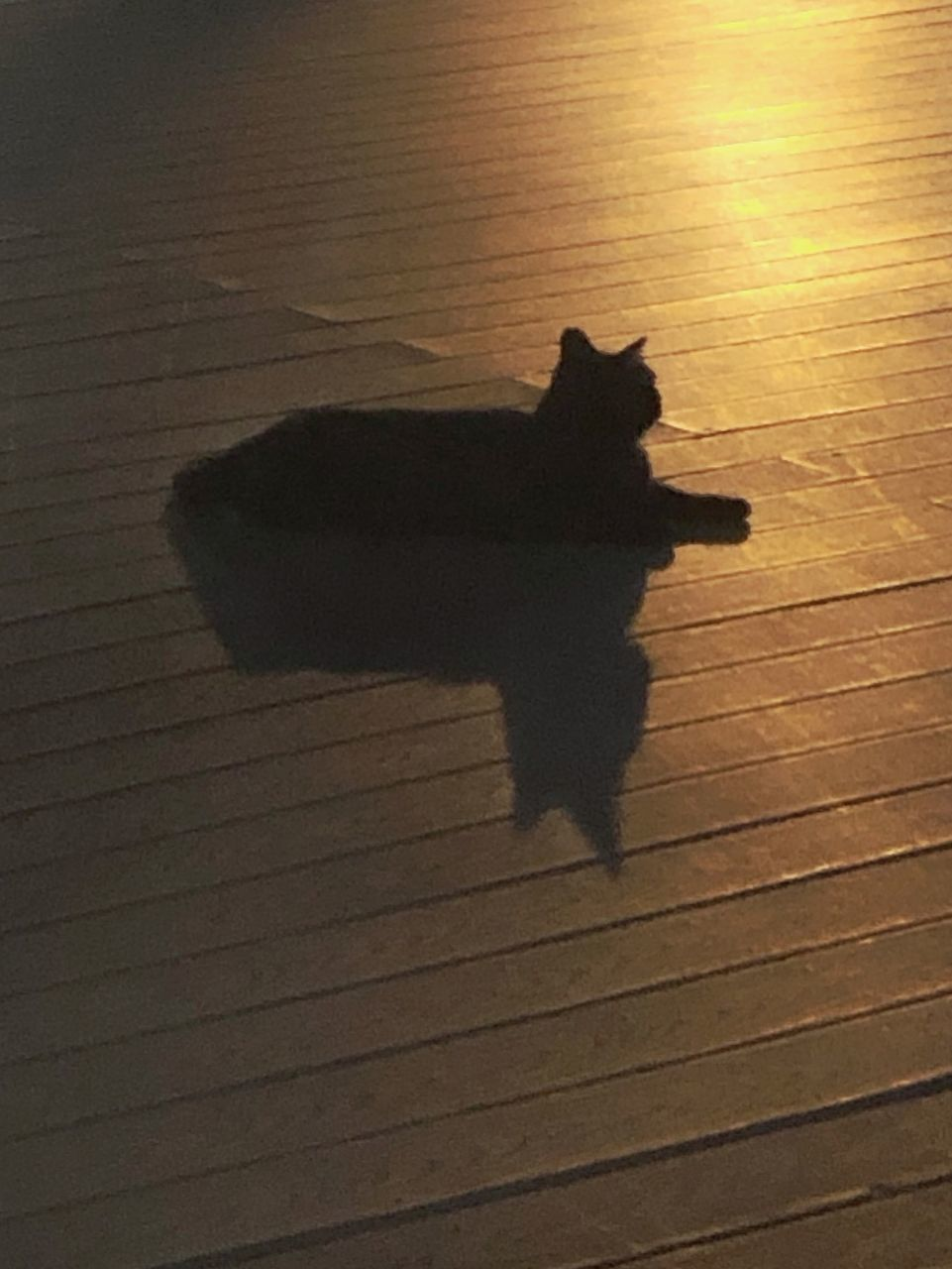 HIGH ANGLE VIEW OF CAT SHADOW ON HARDWOOD FLOOR