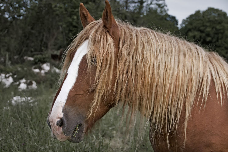 Horse Outdoors Nature Close-up Focus On Foreground No People The Street Photographer - 2017 EyeEm Awards Place Of Heart