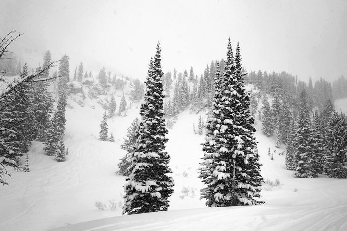 Winterwonderland Bare Tree Black & White Blackandwhite Christmas Cold Temperature Covering Frozen Graphic Group Of Trees Mountains Season  Snow Tree Weather White Christmas Tree Winter
