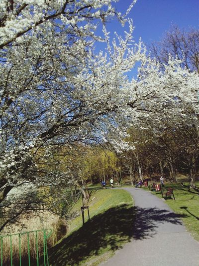 Lovely Weather Jogging People Jogging Enjoying The Sun Spring Flowers Springtime Spring Beautiful Day Peace And Quiet Hello World