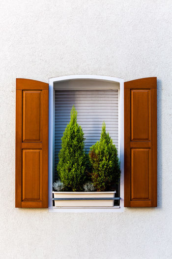 Potted plants on window of house