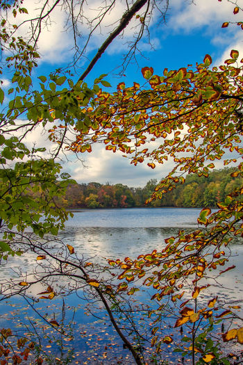 Lake in Autumn Autumn Fall Colors Beauty In Nature Cloud - Sky Foliage Lake Landscape Nature Outdoors Scenics Sky Tranquil Scene Tranquility Tree Water