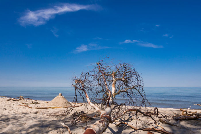 Baltic Sea Relaxing Weststrand Bare Tree Beach Beauty In Nature Blue Branch Cloud - Sky Day Fischland-darß-zingst Horizon Over Water Journey Landscape Nature No People Outdoors Sea Sky Tourism Travel Destinations Tree Trunk Vacation Water