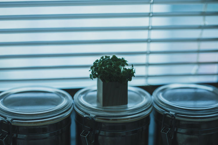 Close-up of potted plant on jar against window