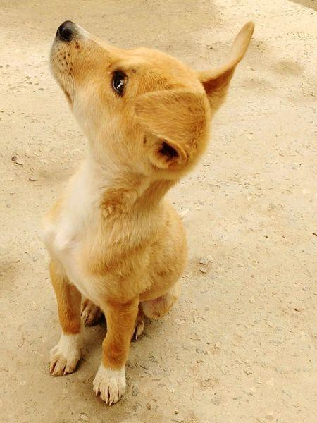 Beautiful Puppy Straydog Loveanimals Adorable Puppy Human's Best Friend ❤