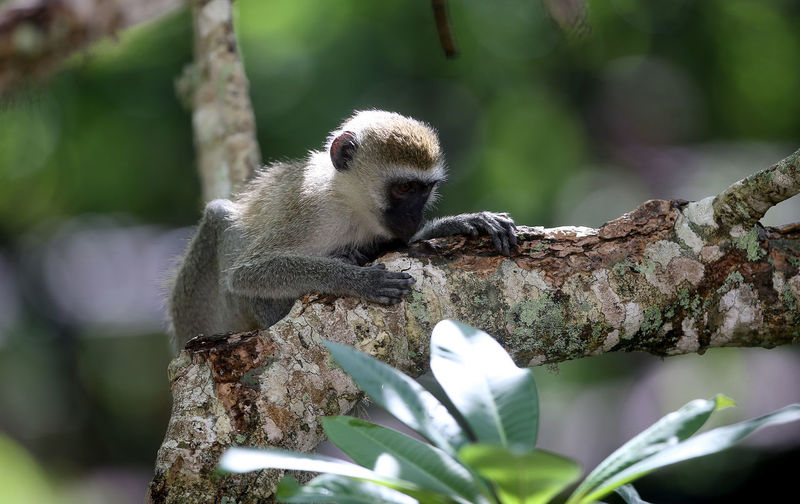 View of monkey on tree branch