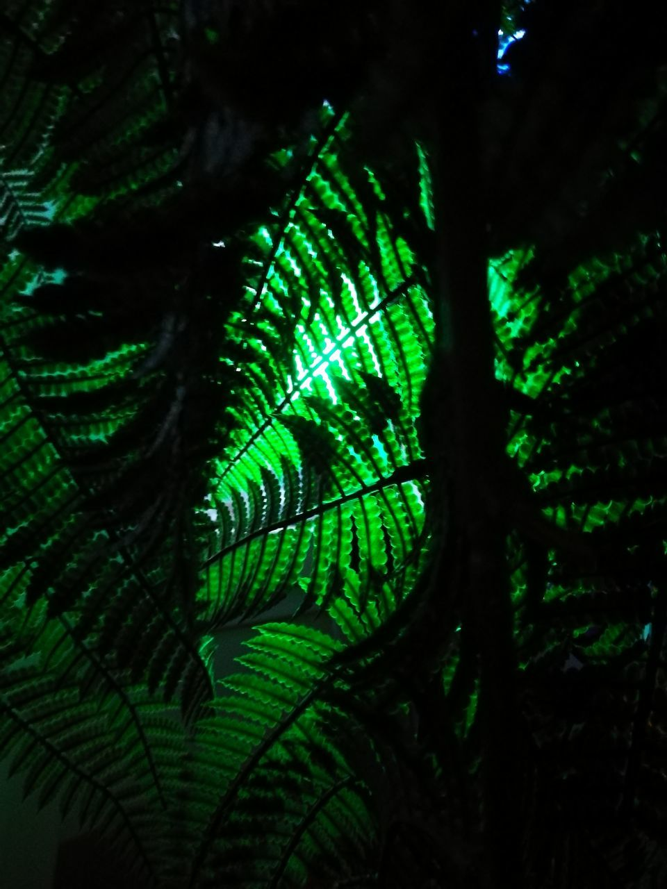 green color, no people, leaf, nature, beauty in nature, fern, close-up, growth, tree, day, outdoors, animal themes