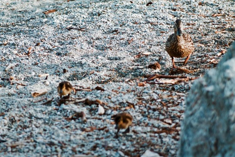 Bird With Young Ones
