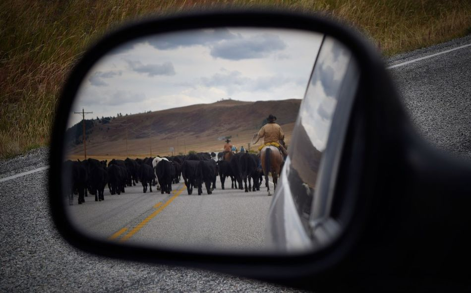 People Day Outdoors Mammal Animal Themes Montana Sky Popular Photos Check This Out Close-up Rearviewmirror Horse Riding Cows Cowboy Roadblock Reflection