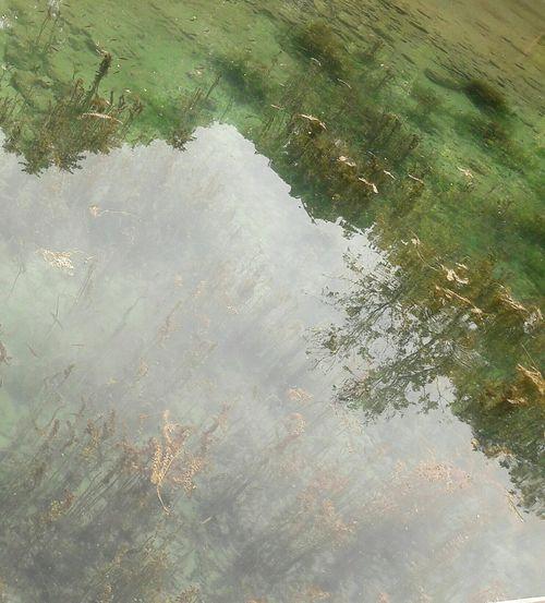Fish From Nature Of Nature Moss Yosun Balik Balık Kaynak Golge Taking Photos Taking Nature Photos Malatya Kareleri