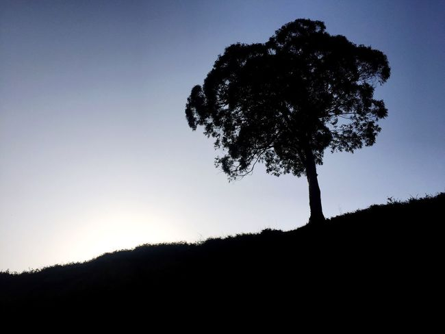 Tree Silhouette Tranquility Nature Tranquil Scene Sky Scenics Beauty In Nature No People Clear Sky Lone Growth Sunset Low Angle View Moon Day