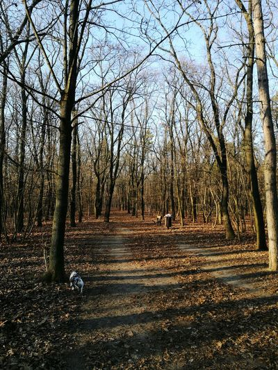 Winter?! Forest Forestwalk Budapest Winter Lastdayoftheyear Lastday2016 Dog Nature