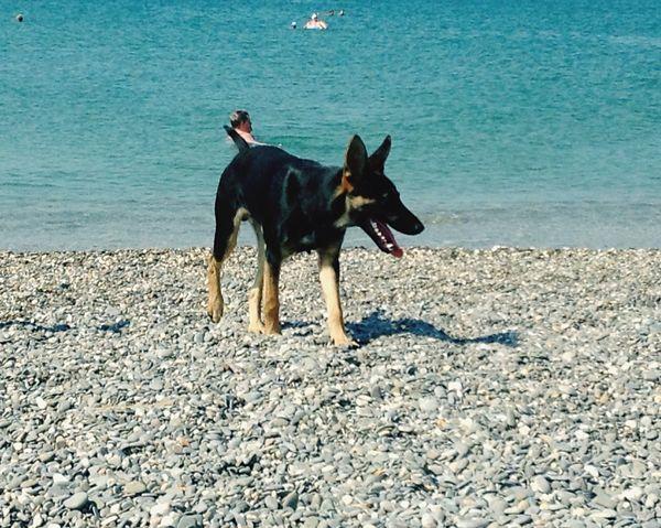Dog My Love❤ Seaside Animals