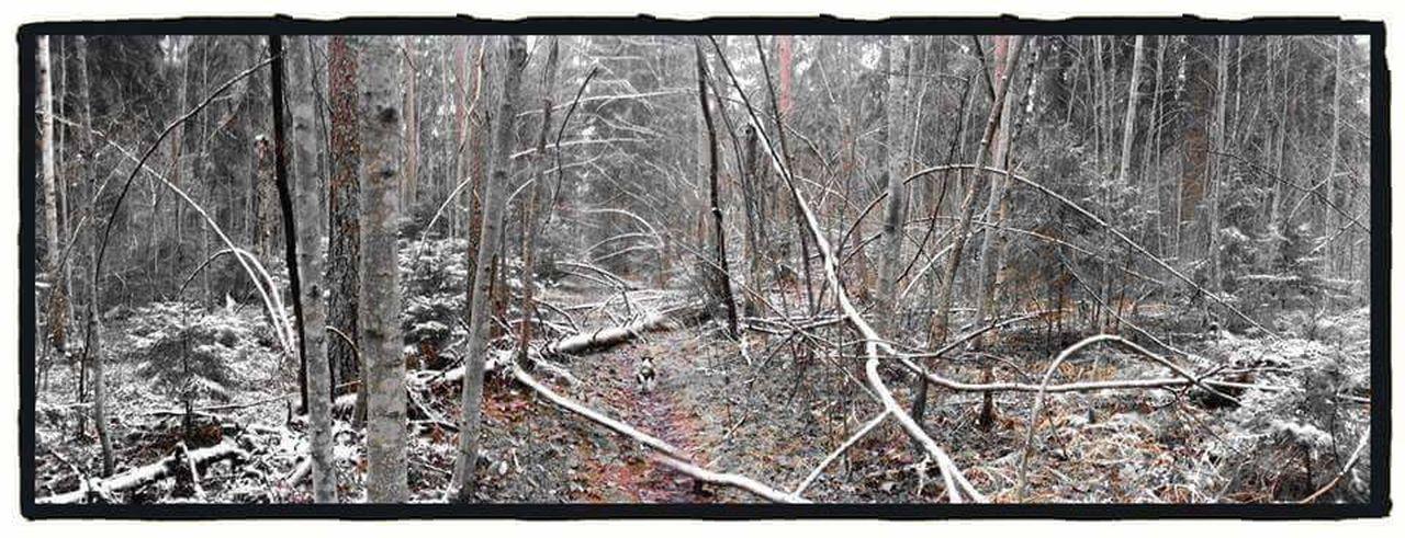 Winter Hyvinkää Forest Finland