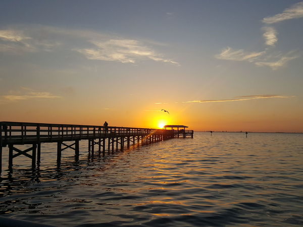 Horizon Over Water Sun Silhouette Pier Bird Photography Tranquil Scene Sunlight Water Travel Destinations