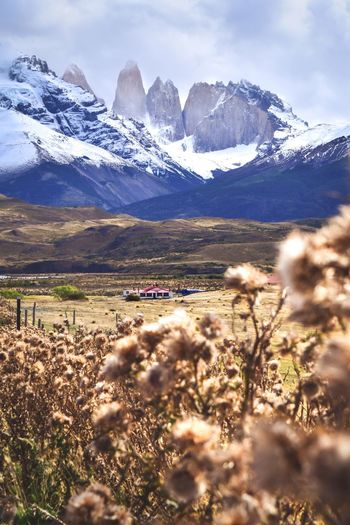 The wilderness of Patagonia Travel National Park Road Trip Chile Patagonia Torres Del Paine National Park Snow Peak Mountain Beauty In Nature Plant Snow Sky Winter Nature Scenics - Nature Mountain Range Landscape Environment Tranquility Day Field Land Cloud - Sky