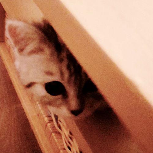 catcontent Cat