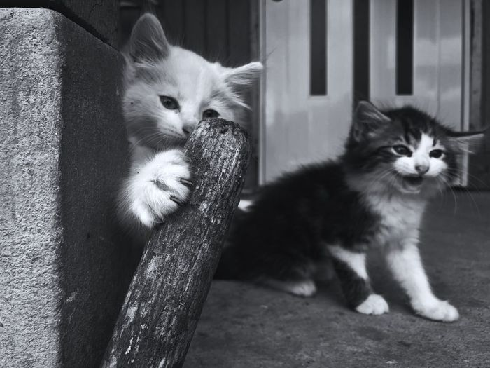 EyeEm Selects Cat Domestic Pets Mammal Domestic Cat Domestic Animals Animal Themes Feline One Animal Looking At Camera No People Animal Whisker Sitting Looking Kitten Portrait