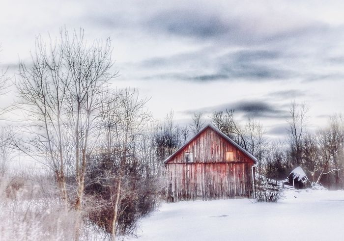 Good Morning Rural Scene Country Redbarn Old Barns January HDR EyeEm Gallery Capture The Moment This Week On Eyeem Winter Snow Cold Temperature Bare Tree Weather Built Structure Sky Architecture Nature Tree Outdoors Building Exterior Beauty In Nature Day Tranquility Scenics Landscape