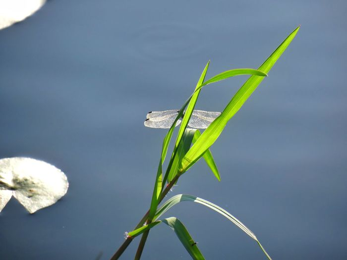 A pond with a lucky charm. Dragonfly I Found A Dragonfly. Love Today Anything Could Happen Wish You Luck