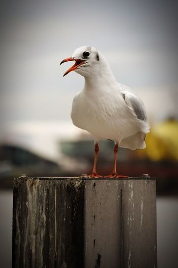 Nature Beauty In Nature Sunlight Sunshine Outdoors Focus On Foreground One Bird On Focus Gull No People Silhouette Beak River Elbe ♥️ Living Organisms Seagull Is Perching Bird Perching Water Seagull Animal Themes Close-up Harbor Port Shipyard Marina Sea Bird