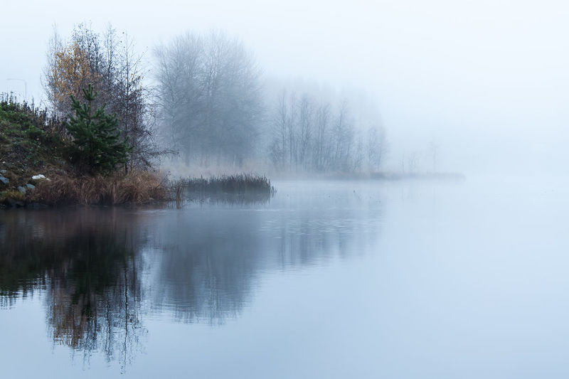 Misty evening Gradient Bare Tree Beauty In Nature Day Fading Fog Foggy Lake Landscape Mist Nature No People Outdoors Reflection Scenics Sky Tranquil Scene Tranquility Tree Water Perspectives On Nature