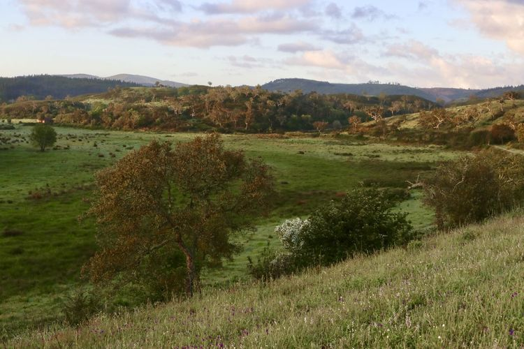Alentejo Portugal Cork Trees Field Hills Landscape Morning Light No People