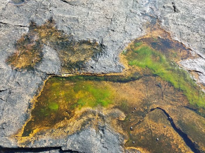Shoreline Low Tide Pool Of Water Abstract Textured  Do You See What I See?