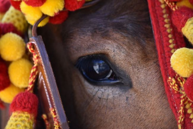 Horse Eye Domestic Animals One Animal Animal Themes Mammal Pets Close-up No People Looking At Camera Outdoors Day Exceptional Photographs Let's Do It Chic! Respect For The Good Taste EyeEmNewHere EyeEm Best Shots Red Yellow Brown Pet Portraits