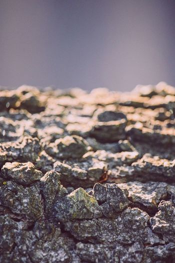 Close-up of stones on rock against sky