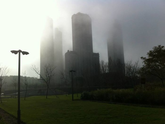 View of trees in park in foggy weather