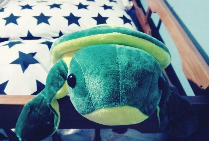 Stuffed Toy Turtle 🐢 Turtle Star Bird's View Cute No People Close-up Indoors  Day