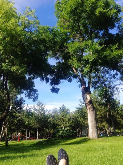 Reading & Relaxing But Not Seem Sky Resting Hello World Trees Happiness