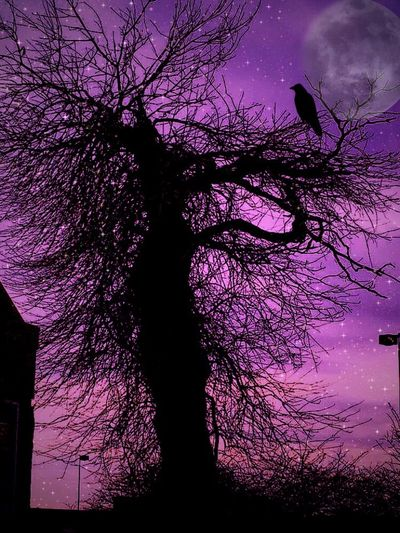 Starry Night Moon Raven Creepy Purple No People Tree Branch Bare Tree Close-up Outdoors