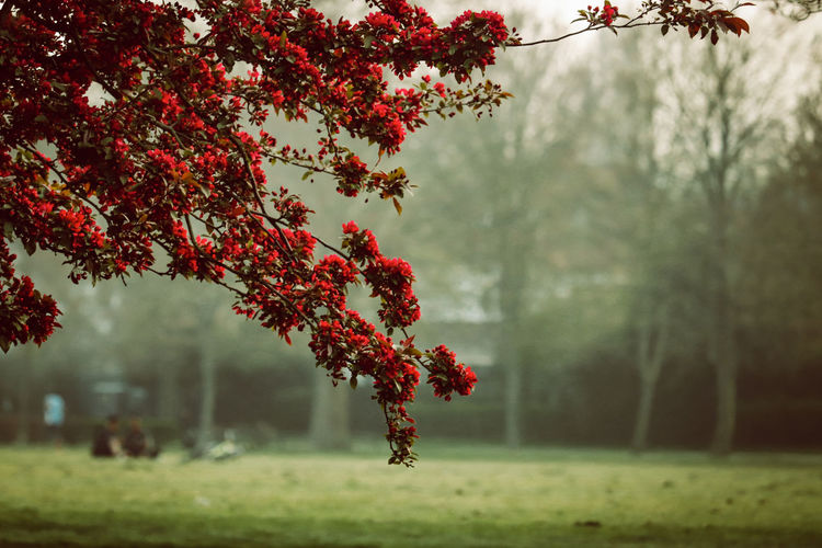 Red tree on field during autumn