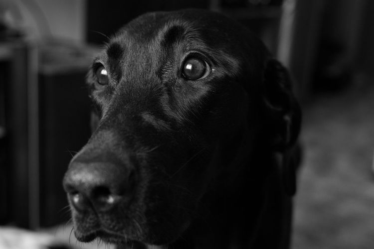 My best friend Dogs Dog Love Pet Pets Doglover Blacklab Beautiful Hello World Eyes Are Soul Reflection Bestfriend