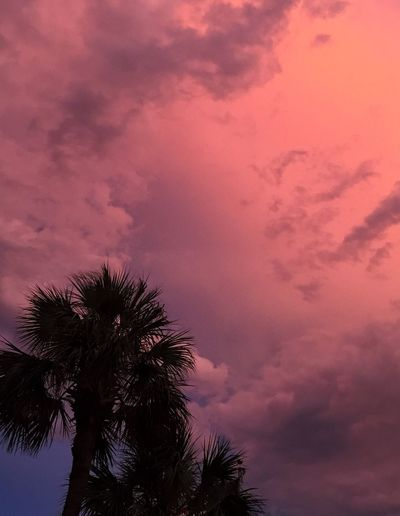 Tropical sky at sunset. Sunset Sky Cloud - Sky Low Angle View No People Nature Tree Beauty In Nature Palm Tree Outdoors Scenics Tranquility Day Pink Sky Coral Color