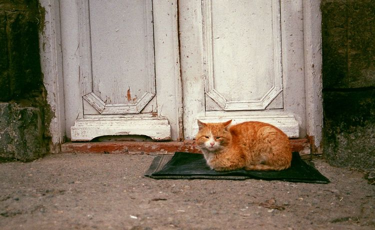 Animal Animal Themes Cat Day Domestic Animals Domestic Cat Feline Film Photography Front View Full Length Ginger Cat Laziness Looking At Camera Mammal No People One Animal Outdoors Pets Sitting Zoology